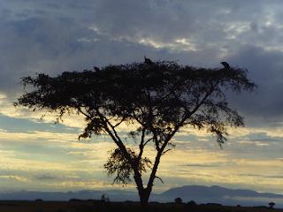 Safari Queen Elisabeth National Park Uganda