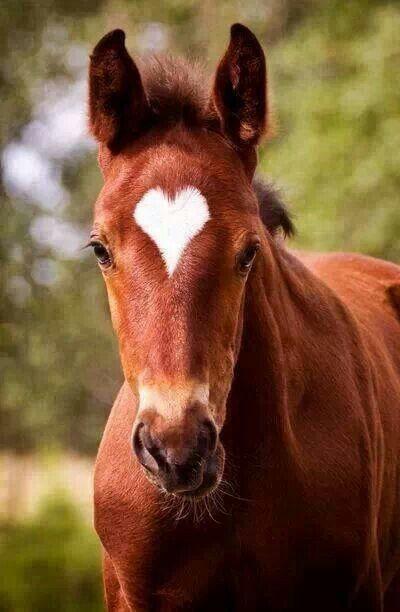 Fotos de caballos hermosos para facebook 27