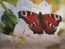 BUTTERFLY OF THE MONTH