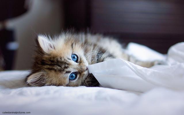 Une Image chaton mignon gratuit