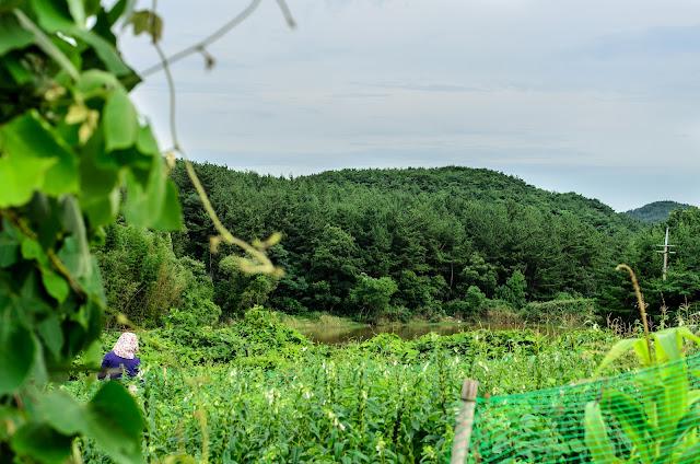 Korea country farm Pohang