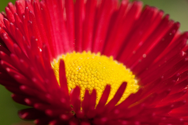 Nature Photography Seen On www.coolpicturegallery.us