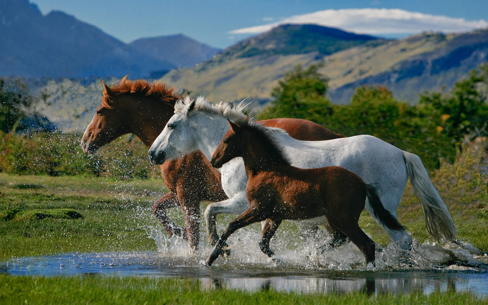 Loving Horses Wallpapers - Entertainment Only