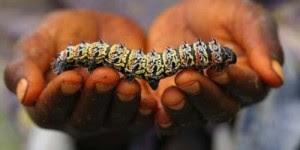 http://www.opoae.com/2013/02/hampir-semua-warga-zimbabwe-suka.html