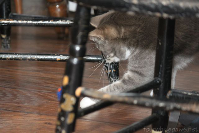 Ow Many Cats Can You Have In Jersey County Il