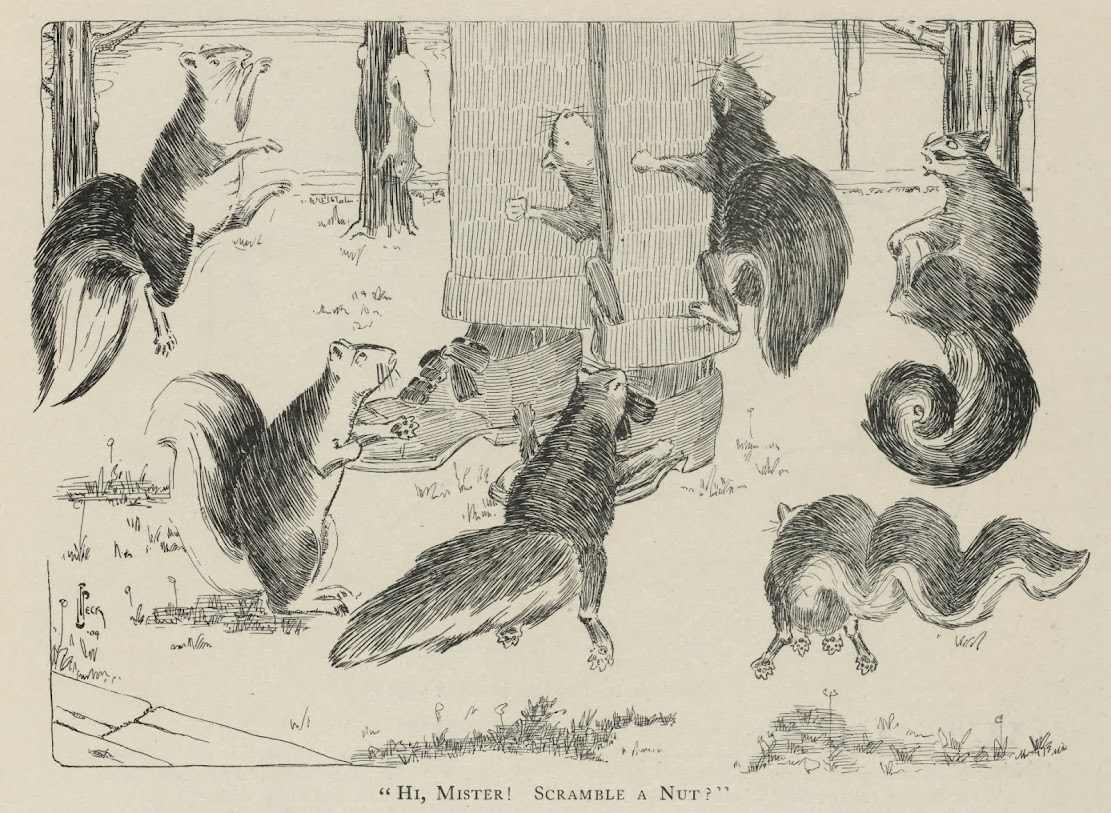 A history of the American urban squirrel