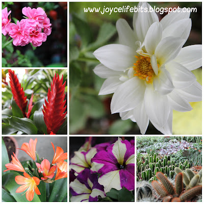compilation of flowers beautiful cameron highlands