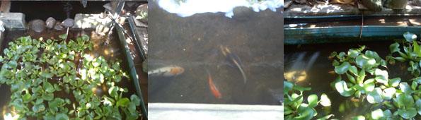 Info Kolam Hias dan Memancing Ikan