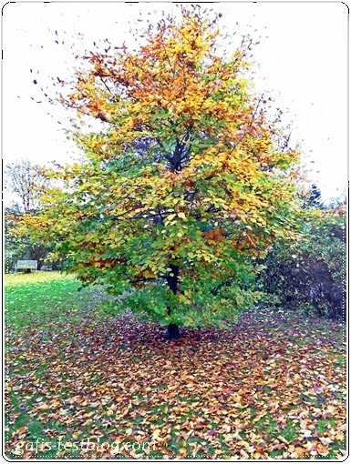 Herbstbaum mit abgefallenem Laub