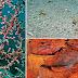 Εκπληκτικό καμουφλάζ -Απίστευτες φωτογραφίες ζώων ώστε να είναι δύσκολο να τα εντοπίσει κανείς