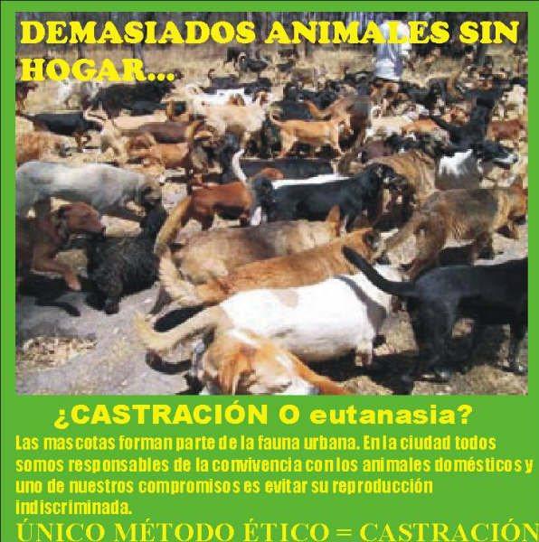 no a la venta de animales, sí a la adopción y control de natalidad