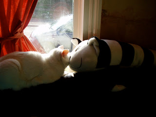 white cat sitting in the window nose to nose with a soft toy cat