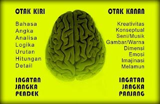 tes otak kanan dan otak kiri,perbezaan,fungsi,cara melatih,fungsi dalam belajar,online,inilah perbedaan,perbedaan otak pria dan wanita,