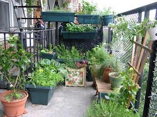 Horta na varanda sem design definido