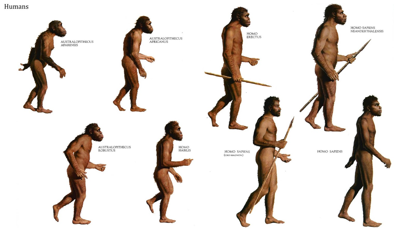 Risultato immagine per homo sapiens