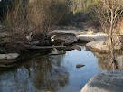 La riera de Merlès al seu pas pel Pont de Les Canals