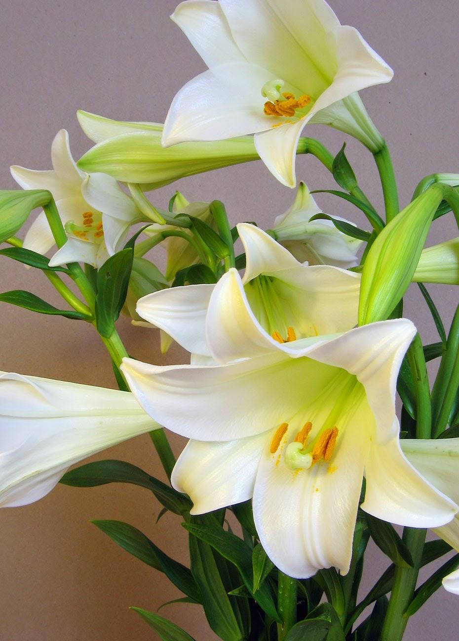 Morfologi tumbuhan setelah kita pahami hal hal yang menyangkut soal rumus bunga artinya jika kita melihat kedua rumus bunga dia atas maka dapat kita bayangkan bahwa ccuart Gallery