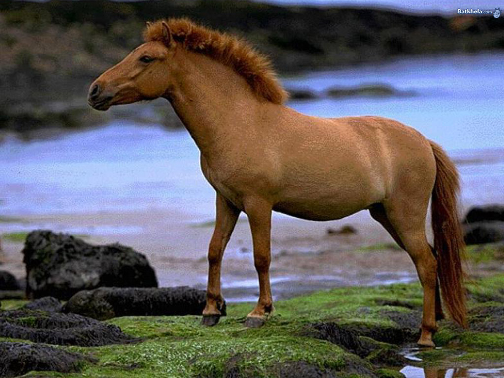 Wild Horses Grouped HD Wallpapers | Beautiful Wild & Pets ...