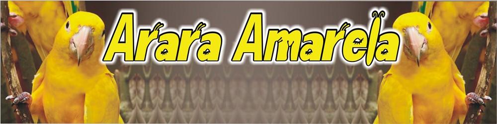 Arara Amarela 2010