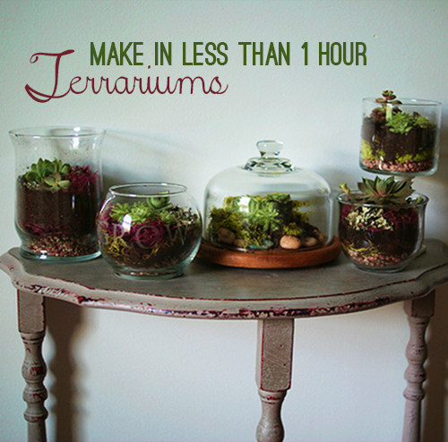 http://savedbylovecreations.com/2013/05/make-terrariums-galore-in-under-1-hour.html