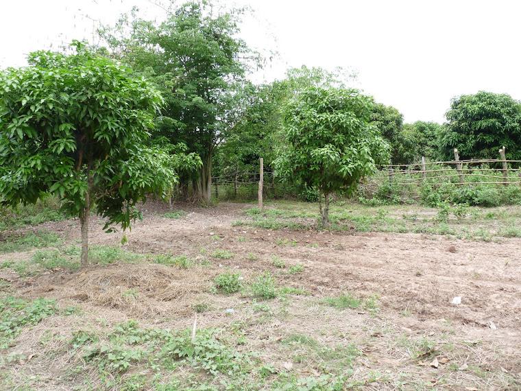 Le jardin potager de l'Ecole Domaines...