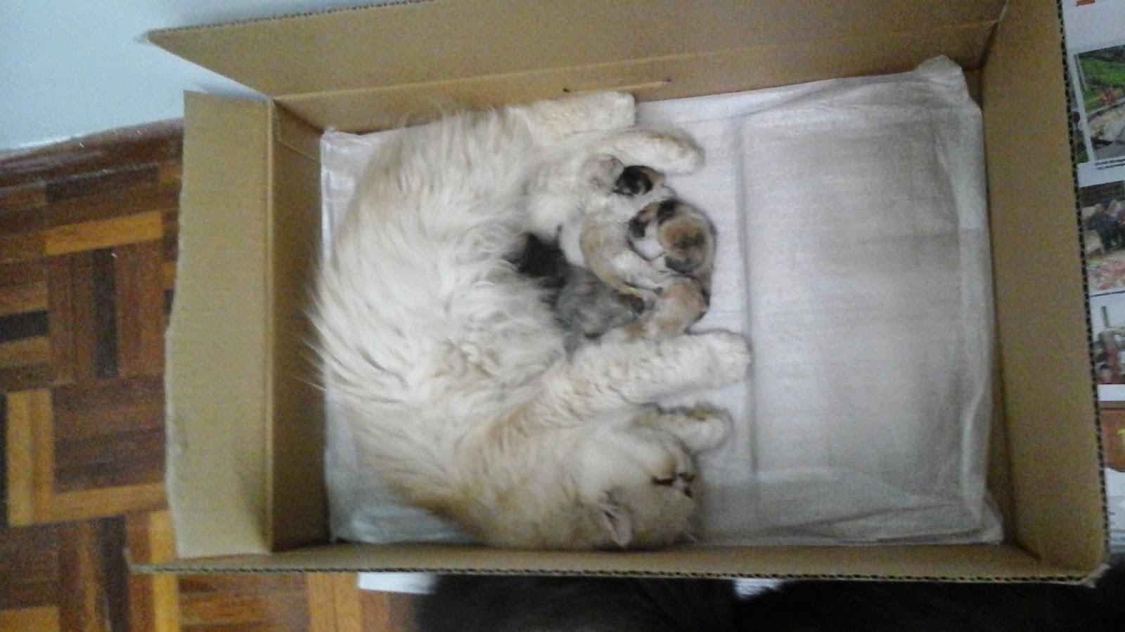 kucing menyusu