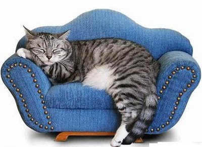 Image result for sleeping cat