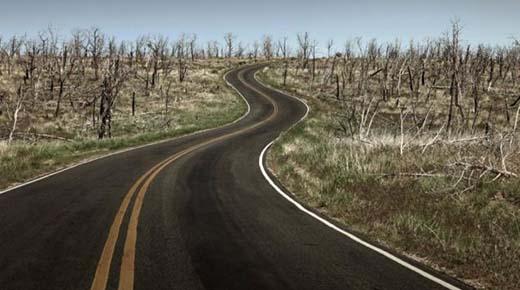La sexta extinción en masa de la Tierra puede estar en marcha