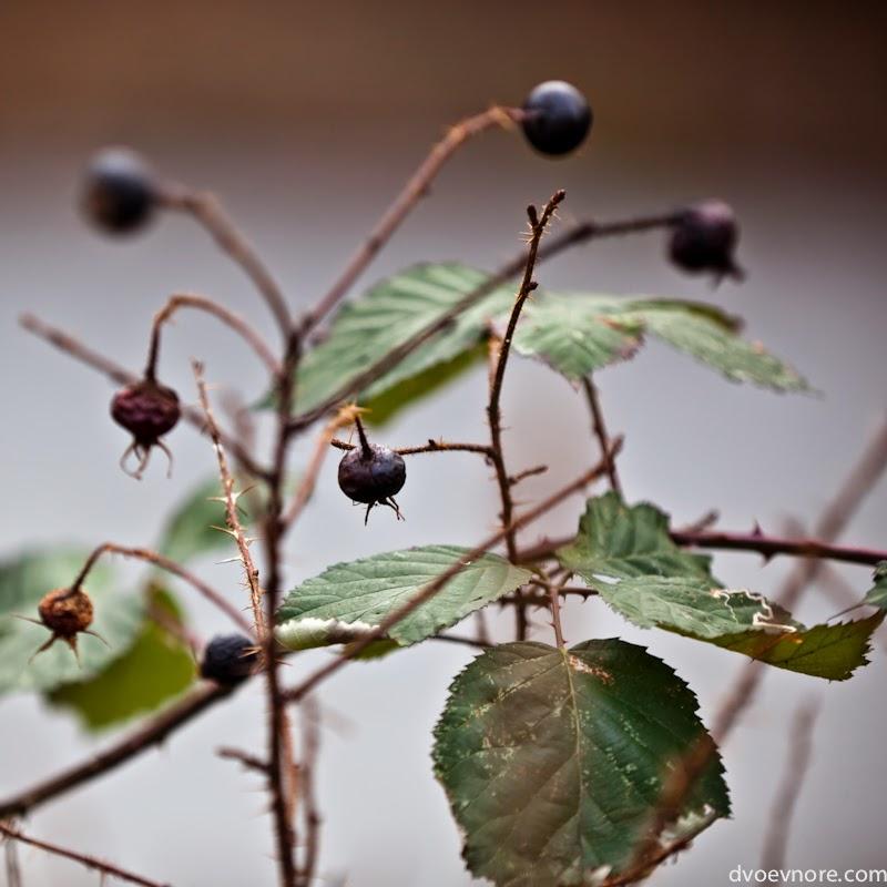 Растения зимой. Dry plant at winter