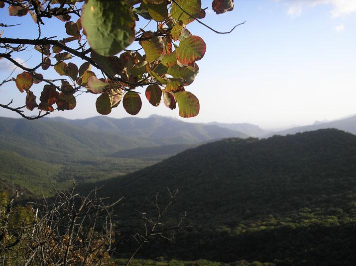 Shahmurza gory i les