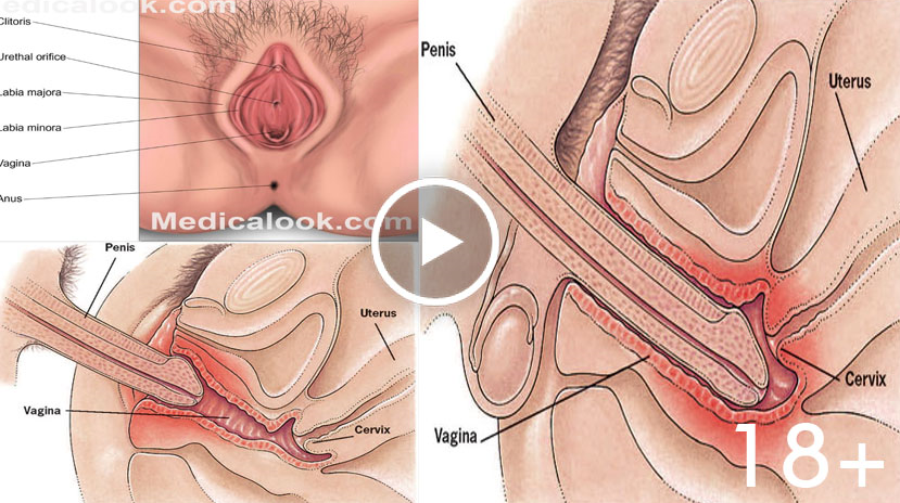 penetrate penis Howto