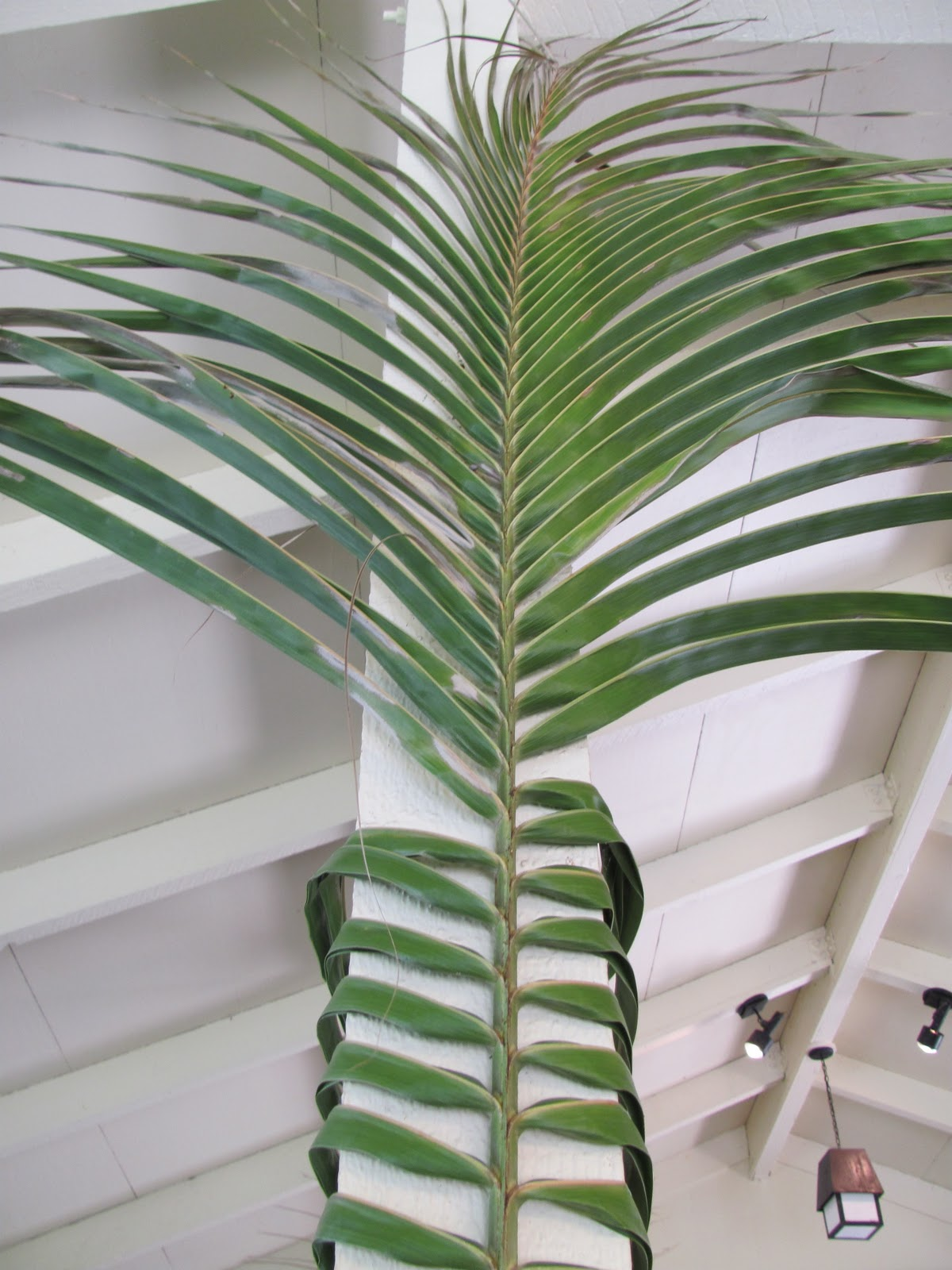 Planted Cloud Palm Decor
