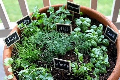... Own Container Garden. These Pots Can Be Anywhere On Your Window,  Terrace Or A Portico And Can Provide Delicious Food Around The Year. Here  Are Simple ...