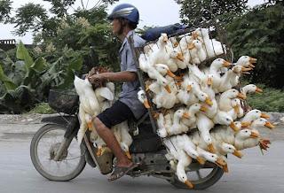 vendedor de patos