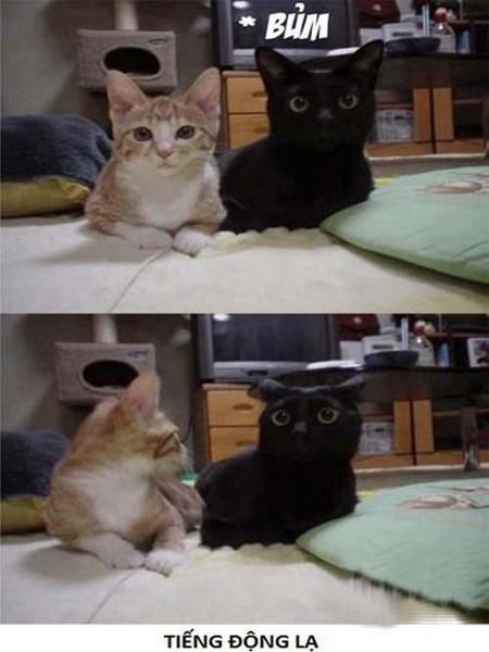 Chú mèo đáng iu