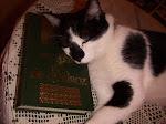 Depois de uma leitura, uma soneca