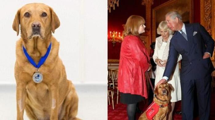 Daisy : Anjing Yang Bisa Mendeteksi Penyakit Kanker Pada Manusia