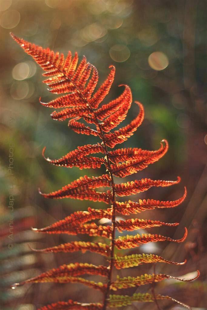 ferns light beautiful