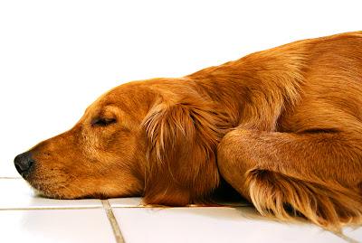 pet dog life
