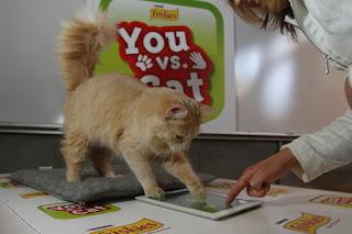 buy cat scratching post