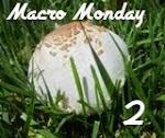Macro Monday 2