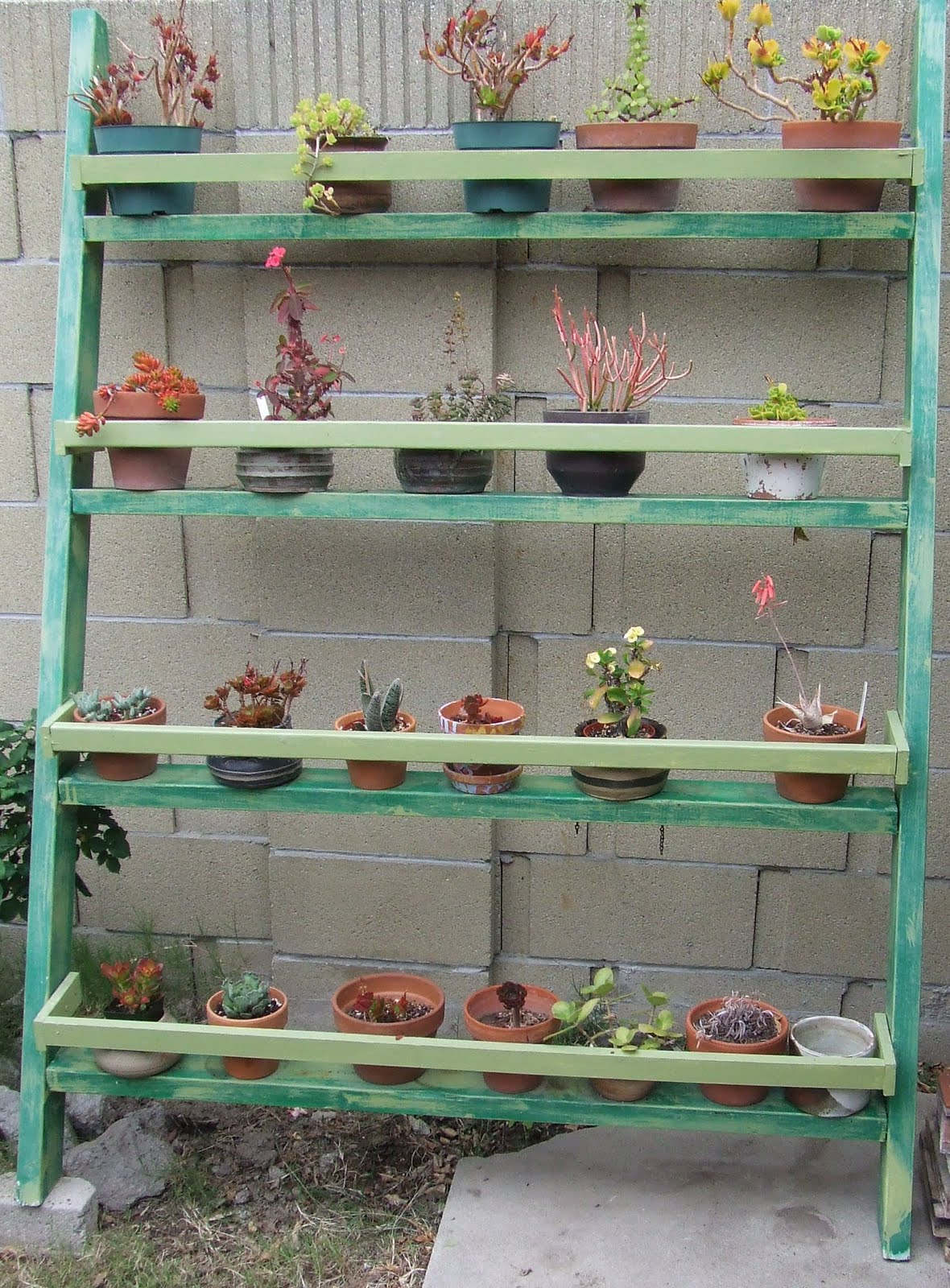 Ladder garden Whats Growin On
