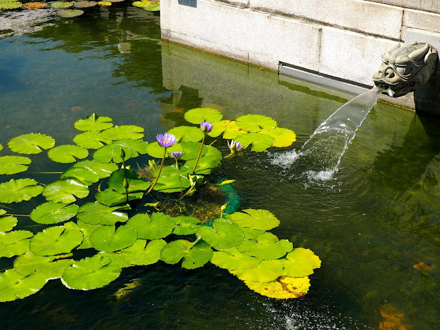 Lilies in a water feature of Nan Lian Gardens, Kowloon, Hong Kong