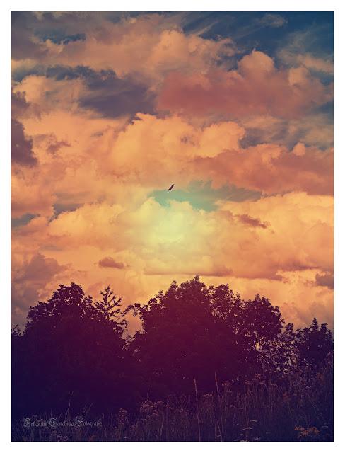 Aufnahme vom Himmel mit einem Vogel der vor den Wolken fliegt im Retro Stil