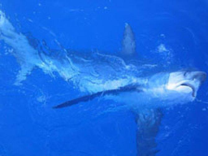 its 4reels sportfishing association of california