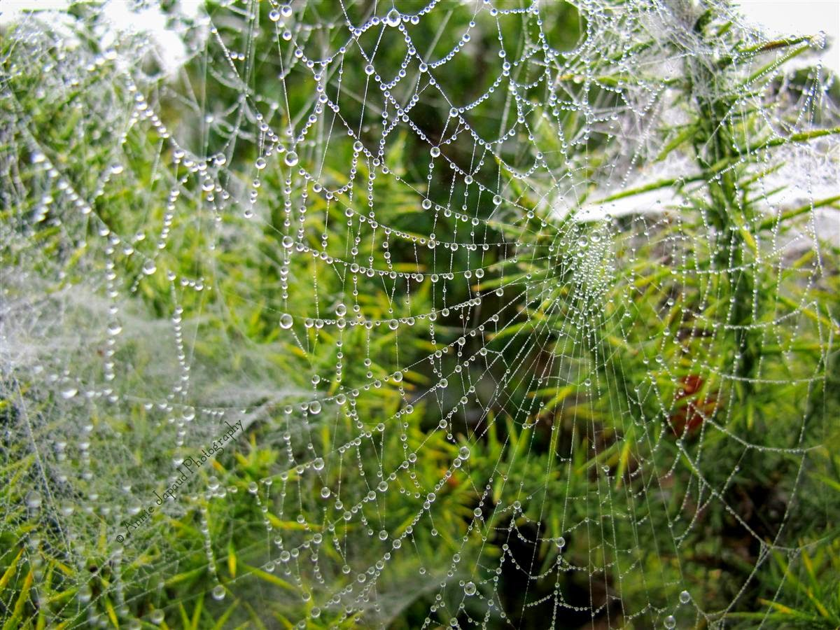 macro image of raindrops in a cobweb