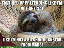 Funny sloths photos funny images show - Funny sloth pics ...