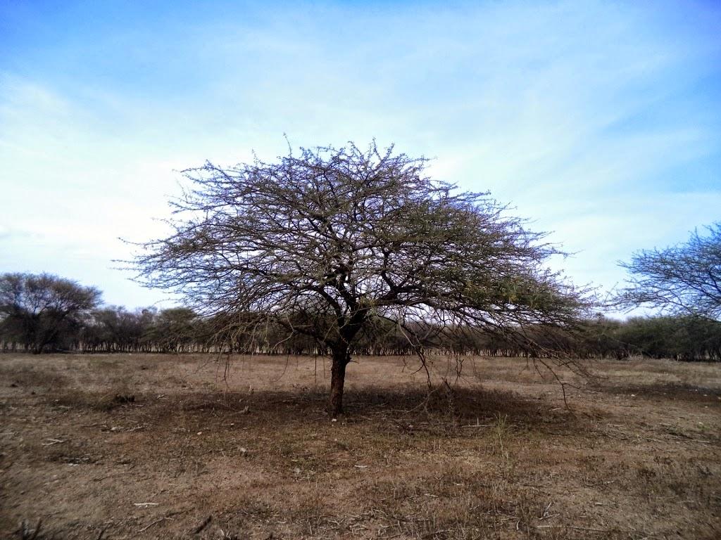 Landscape in Vellalore dam