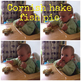 Cornish hake fish pie, dairy free, baby led weaning