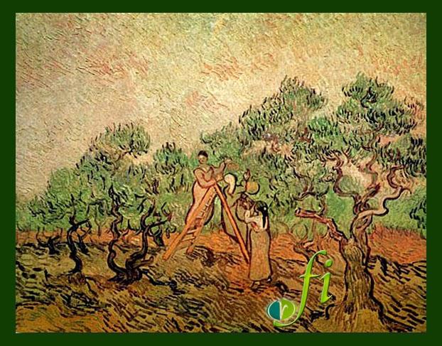 Olive Tree History